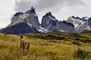 TDF-Guanaco-Facing-Away-From-Mountain-5-11-20