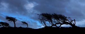 TDF-Tierra-Del-Fuego-Trees-5-8-2020