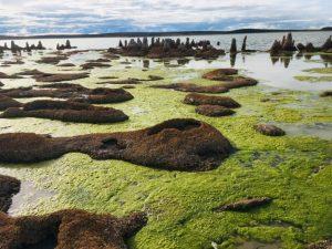 TDF-Algae-Between-Rocks-6-23-20