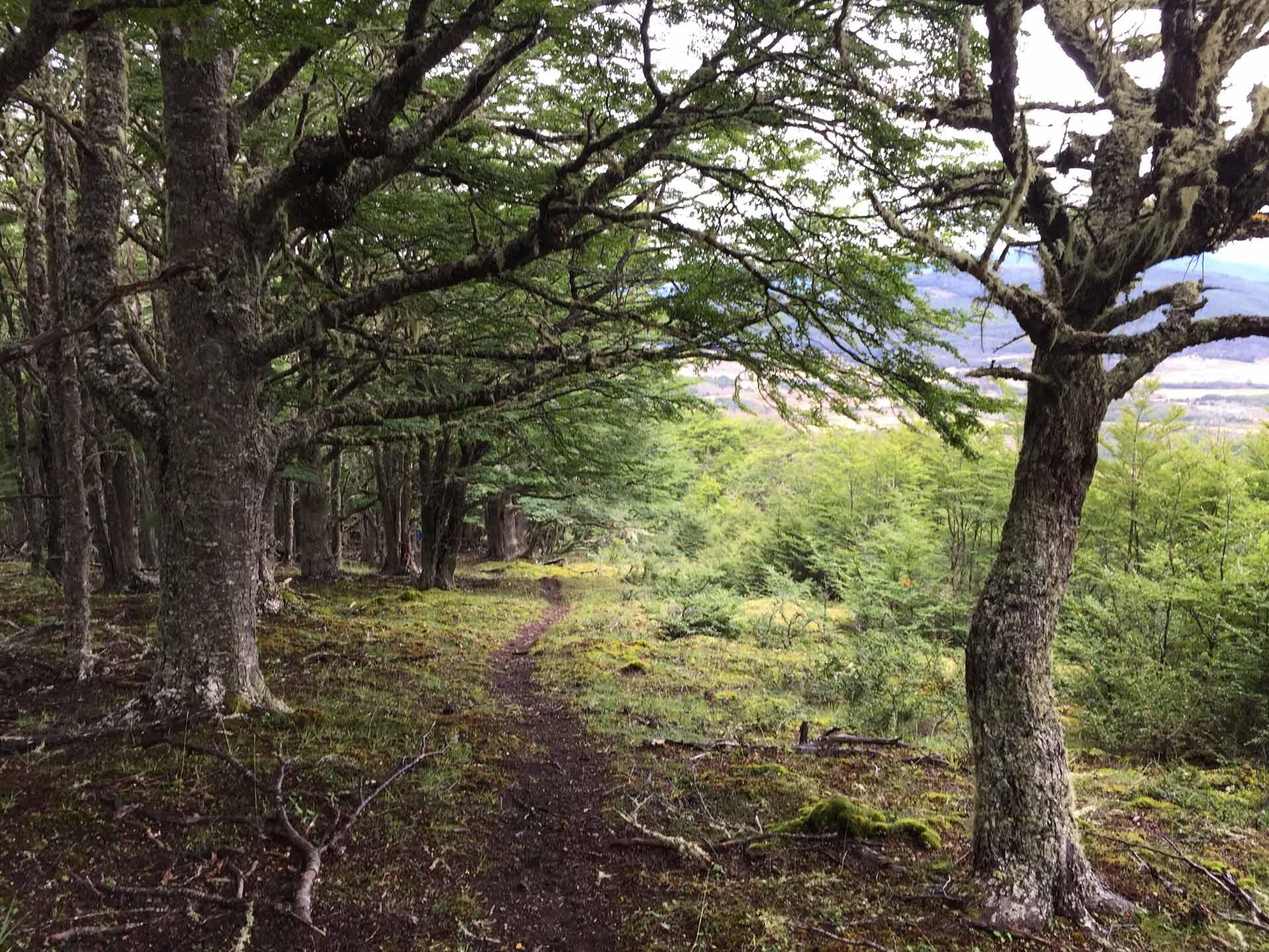 TDF-Forest-Dirt-Path-6-23-20