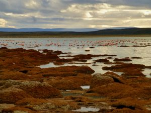 TDF-Orange-Rocks-And-Flamingos-6-23-20