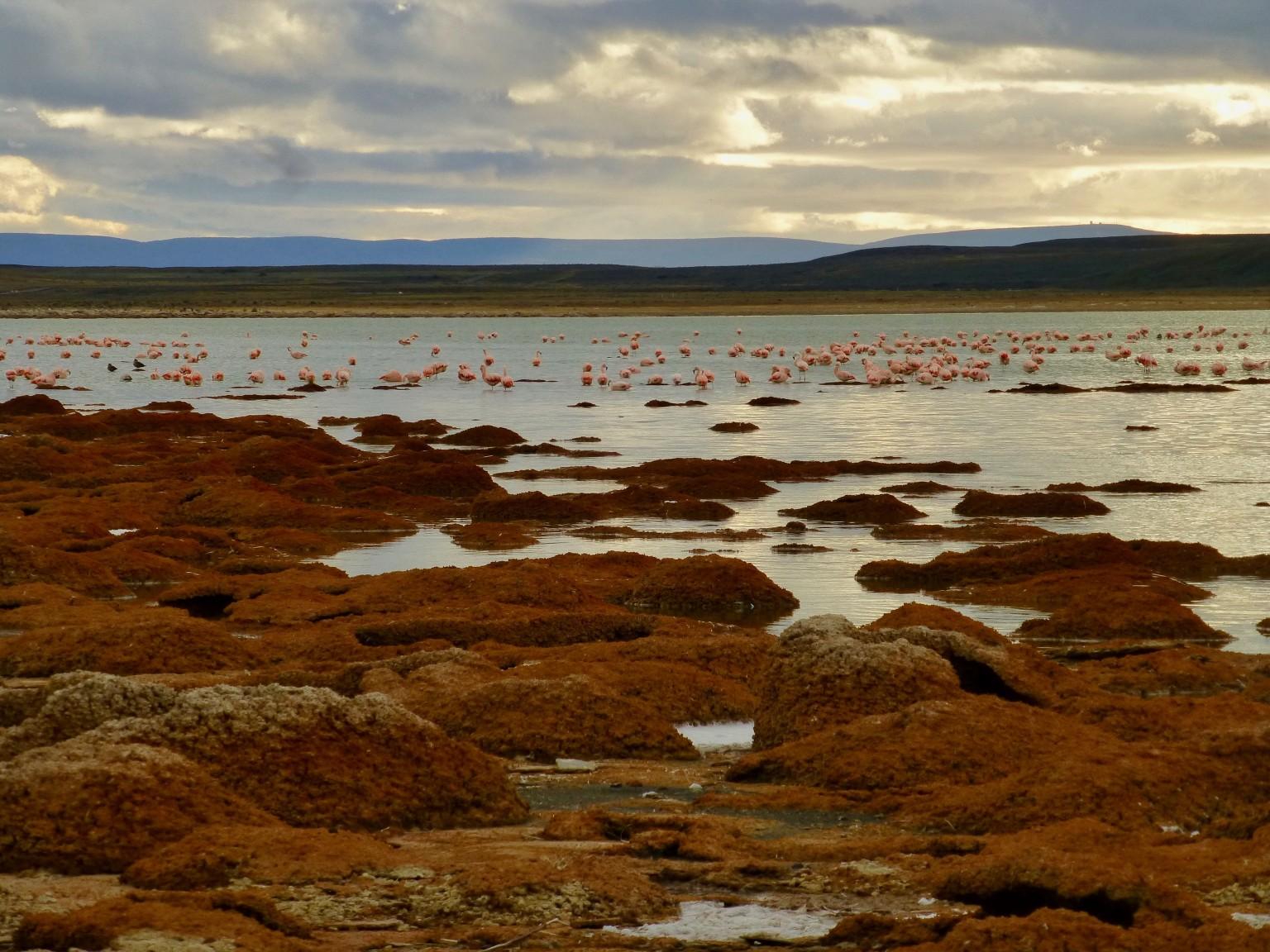 TDF-Orange-Rocks-And-Flamingos-6-23-20