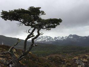 TDF-Tree-Mountain-Background-6-23-20
