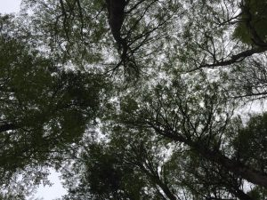 TDF-Tree-Tops-6-1-2020