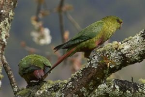 TDF-Two-Parakeets-6-23-20