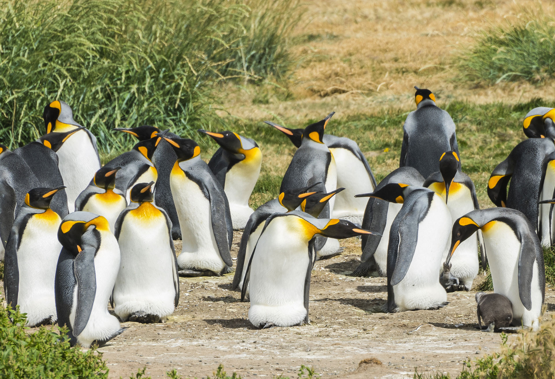 TDF-Penguins-Near-Grass-6-23-20